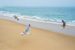 Seemöwenvogelfliegenstrand-Türkisblau-Seeozean-Wasserwellen-Horizontskylinemorgen-Dämmerungsnebel Lizenzfreie Stockbilder