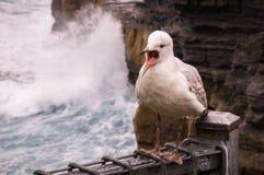 Seemöwevogel stockfotografie