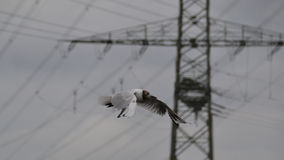 Seemöwevogel im Flug stockfoto