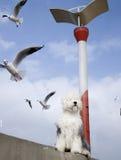 Seemöwevogel und -hund Stockbild