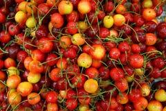 Rainier Cherries royalty free stock images