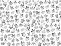Seemless pattern with maple leaves in black and white Stock Image
