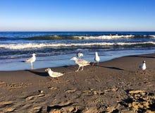 Seemöwen auf einem Strand Lizenzfreie Stockfotografie