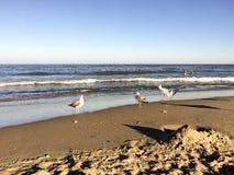Seemöwen auf einem Strand Stockfotografie