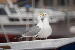 Seemöwen auf Schiffdach Stockfotografie