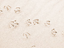 Seemöwenabdrücke auf Sand Lizenzfreie Stockbilder