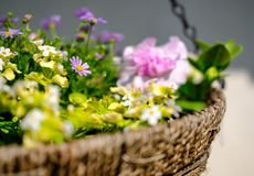 Close-up of a newly planted hanging basket showing a variety of young, summer flowers. stock photos