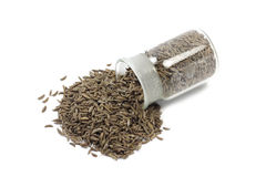 Seena cumin spilling from a glass bottle Royalty Free Stock Image