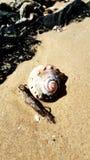 Seeoberteil auf dem Strandsand mit Treibholz lizenzfreies stockbild
