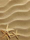 Seeoberteil auf Sand Stockfotos
