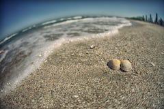 Seeoberteil auf Sand lizenzfreie stockfotografie