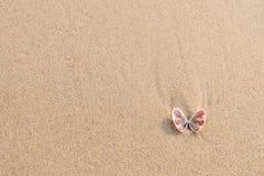 Seeoberteil auf Sandstrand mit Kopienraum Beschneidungspfad eingeschlossen Lizenzfreie Stockbilder