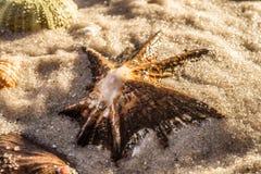Seeoberteil im Sand Stockfoto