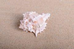 Seeoberteil im Sand Lizenzfreies Stockfoto