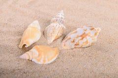 Seeoberteil im Sand Stockfotografie