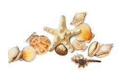 Seeoberteil und Starfishzusammensetzung lokalisiert auf Weiß Stockfotografie