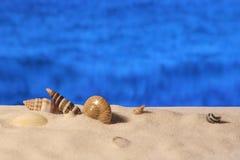 Seeoberteile auf dem sandigen Strand Stockfotografie