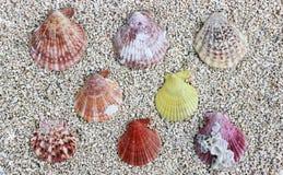 Seeoberteile auf dem Strand Lizenzfreies Stockfoto