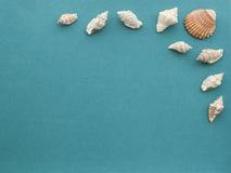 Seeoberteile auf einem rauen grün-blauen Papierhintergrund Lizenzfreie Stockbilder