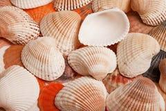 Seeoberteile auf Sand als Hintergrund stockbilder