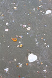 Seeoberteile im Strandsand Lizenzfreie Stockfotografie