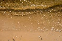 Seeoberteile mit Sandhintergrund Stockfotografie