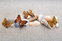 Seeoberteile und -schmetterling auf Sand Stockfoto