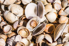 Seeoberteile von verschiedenen Formen Stockfoto
