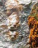 Seeotteranschluß Stockbilder