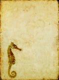 Seepferden-Hintergrund Stockfotos