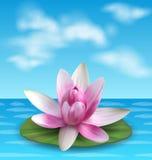 Seerose, Nenuphar, Spritzen-Dock, rosa Lotus auf grünem Blatt Blume exotisch stock abbildung
