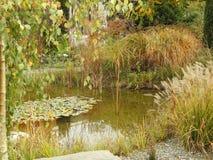 Seerose wird im Wasser reflektiert Stockfotos