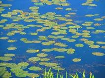 Seerosen im Wasser Lizenzfreies Stockfoto