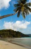 Seesaw i drzewko palmowe fotografia royalty free
