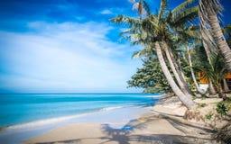 Seesaw on palm on caribbean beach Stock Photography