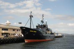 Seeschäferhundlieferung Steve Irwin Stockfotografie
