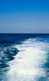 Seeschaumgummi Lizenzfreie Stockfotografie