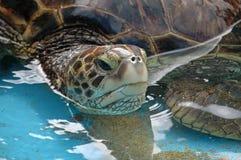 Seeschildkröte stockbild
