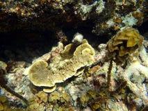Seeschildkröte nahe Gili Meno Stockbilder