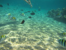 Seeschildkröte nahe Gili Meno Lizenzfreies Stockfoto