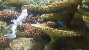 Seeschildkröte nahe Gili Meno Lizenzfreies Stockbild