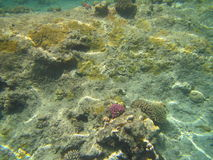 Seeschildkröte nahe Gili Meno Stockfotografie