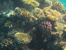 Seeschildkröte nahe Gili Meno Stockfoto