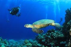 Seeschildkröte und Unterwasseratemgerät-Taucher Stockbilder