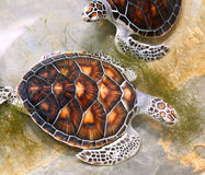 Seeschildkröten in der Baumschule Stockbild