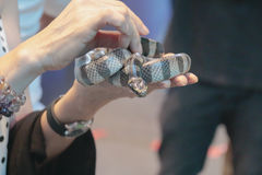 Seeschlangen Lizenzfreie Stockfotografie