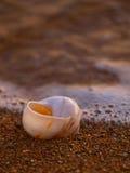 Seeschnecke am sandigen Strand Stockbild