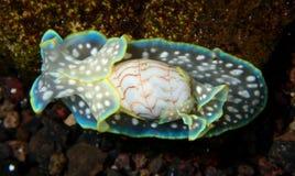 Seeschnecke von oben lizenzfreies stockfoto