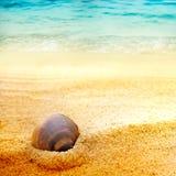 Seeshell auf feinem Sand Stockfotografie