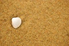 Seeshell auf sandigem Strand Lizenzfreies Stockfoto